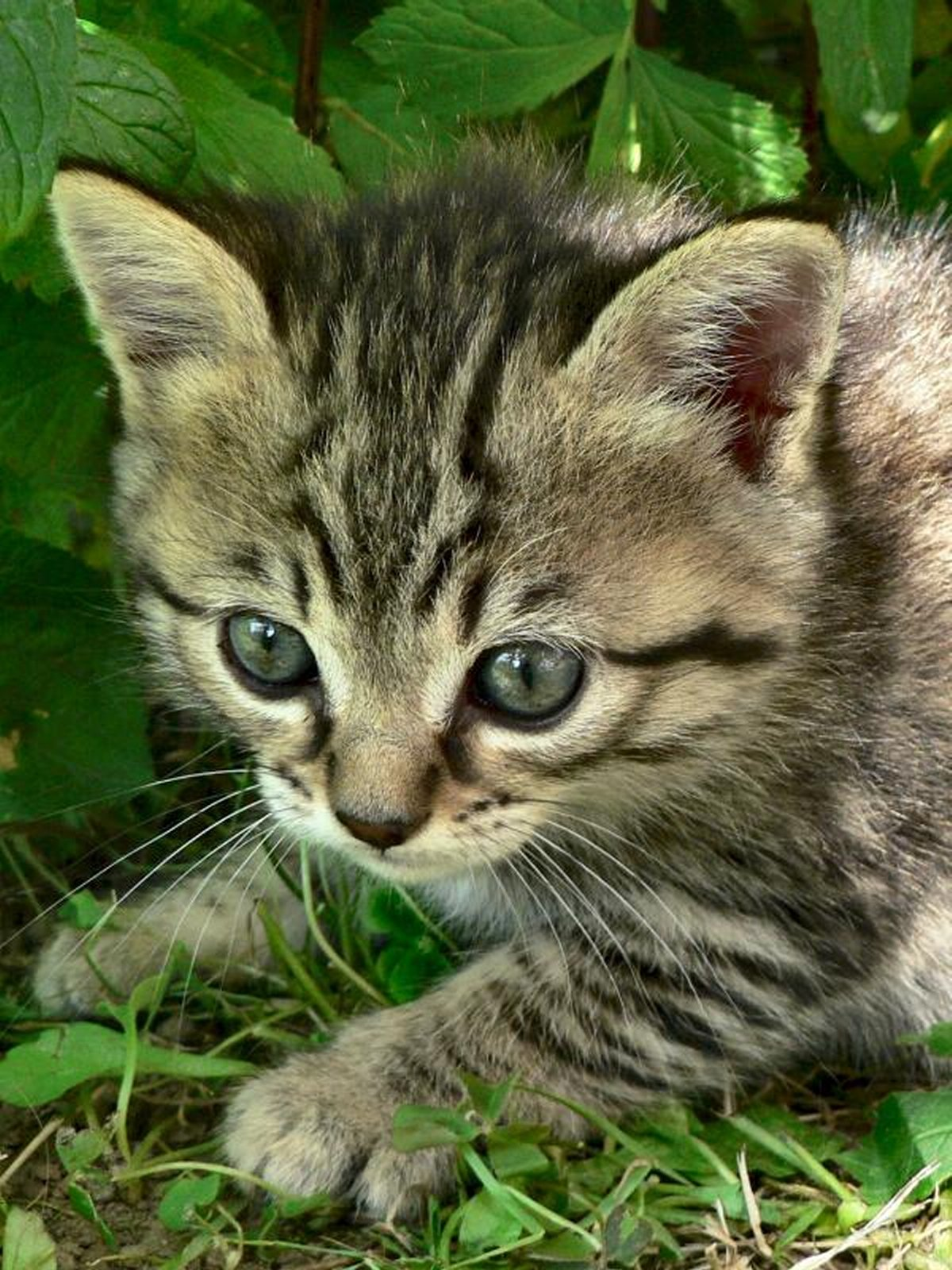 cats-and-kittens-0033