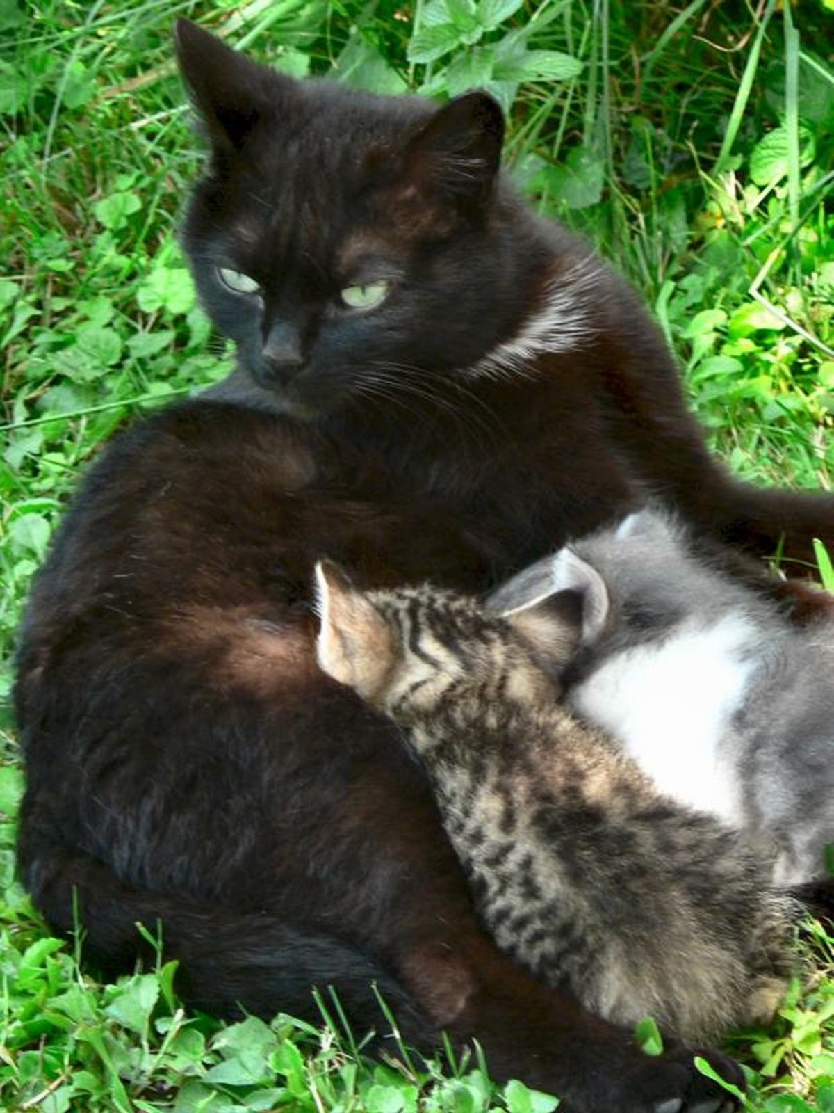 cats-and-kittens-0042
