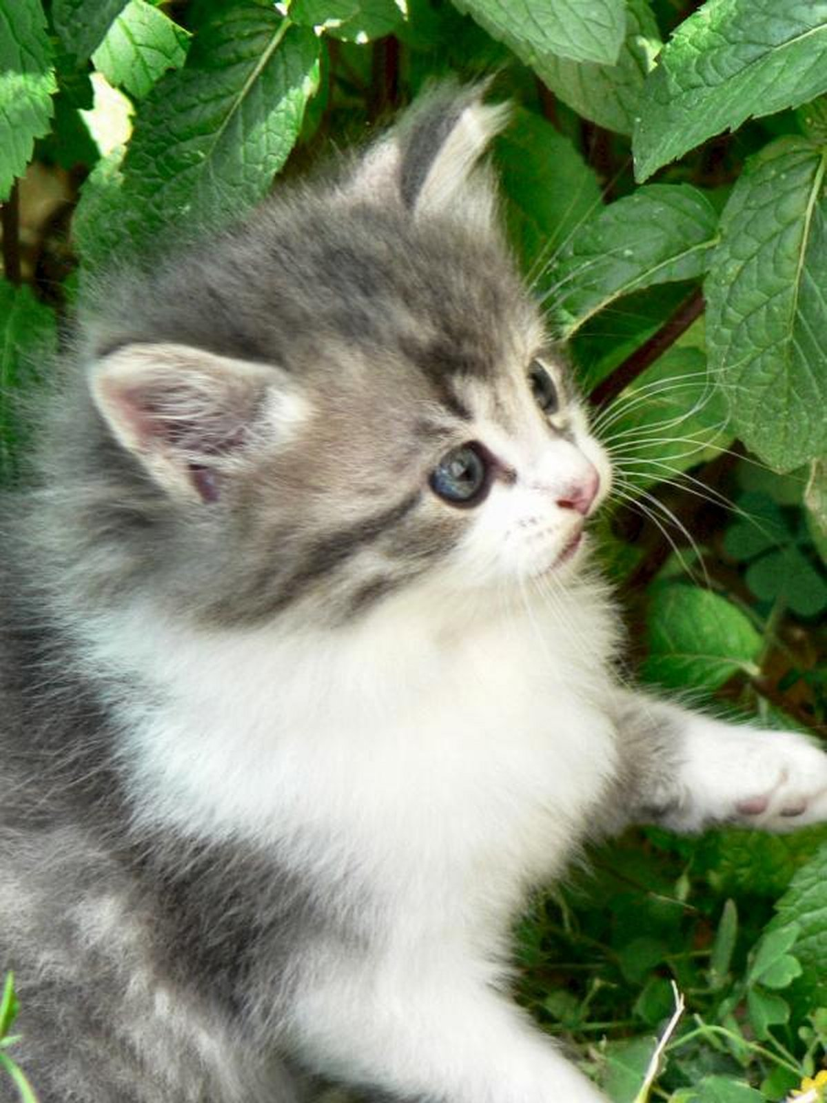 cats-and-kittens-0045