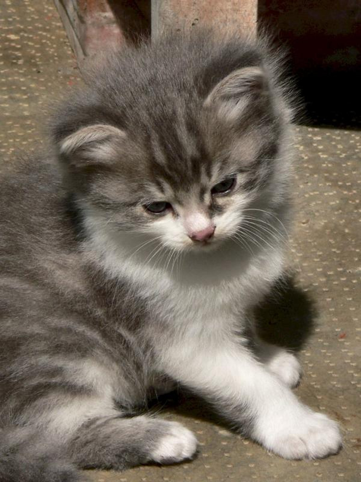 cats-and-kittens-0046