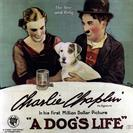 Dogs Life A 1918 movie poster