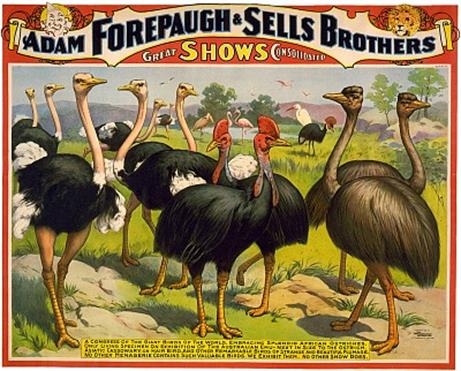 Vintage-Circus-Posters-A-congress-of-the-giant-birds-of-the-world