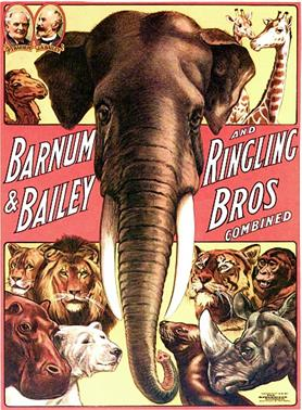 Barnum-and-Bailey-and-Ringling-Bros-Combined---Elephant