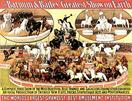 Vintage-Circus-Posters-Most-Beauriful-Best-Trained-And-Sagacious-Equines