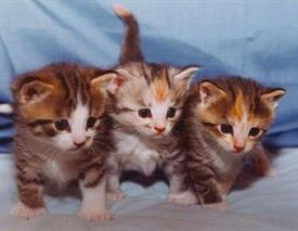cats-and-kittens-0369
