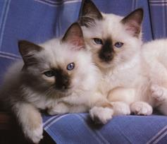 cats-and-kittens-0024